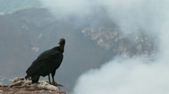 A vulture on the edge of the Masaya volcano Stock Footage