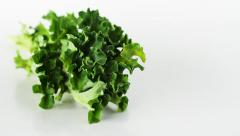 Kale (Curly-leaf ) vegetable studio closeup on a white background Stock Footage