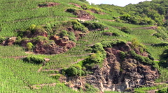 Vineyards Mosel River Germany terraced valley walls Stock Footage