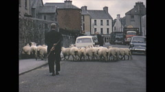 Stock Video Footage of Vintage 16mm film, 1965, North Ireland sheep in the streets, charming. POV