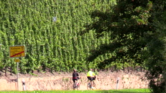 Cyclists on country road Urzig Germany Mosel River Valley with vineyards Stock Footage