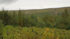 ICELAND Vaglaskogarvegur forest Wald - stock footage