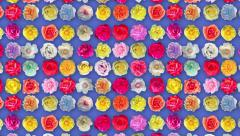Roses background rotation animation Stock Footage