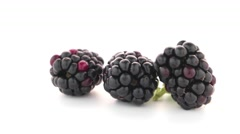 fresh berry blackberry - stock footage