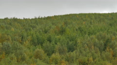 ICELAND Vaglaskogarvegur forest Wald Stock Footage