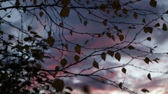 Fall in the forest. Autumn leaves and sunset sky in motion - stock footage