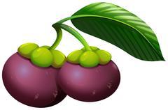 Fresh mangosteens with stem - stock illustration