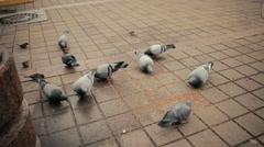 Streets pigeons eat fodder on sidewalk Stock Footage