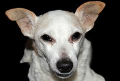 snout of white dog - stock photo