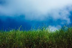 Grass, blue sky and clouds Stock Photos