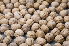 Plenty of walnuts - stock photo