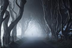 Ireland, Antrim, Stranocum, Dark Hedges, View along foggy walkway lined with Stock Photos