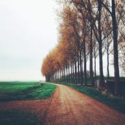 Netherlands, Zeeland, Reimerswaal, Kruiningen, View along treelined country road - stock photo