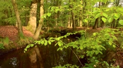 Creek in a Beech tree forest - stock footage