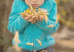 Boy (4-5) blowing autumnal leaves - stock photo