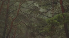 Misty Pines Forest and Autumn Fog Upper Branches of Tree Stock Footage
