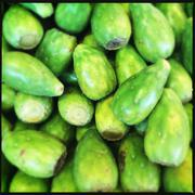 Close-up view of stack of pear cacti - stock photo