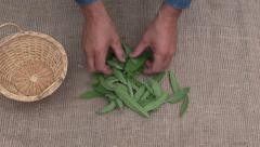 Man herbalist  preparing fresh herbs on linen cloth Stock Footage