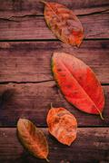 Autumn background with colored  leaves falling on grunge wooden board. - stock photo