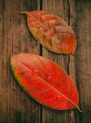 Stock Photo of Autumn background with colored  leaves falling on grunge wooden board.