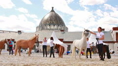 Ponies at VDNKh, Moscow, Russia. Stock Footage