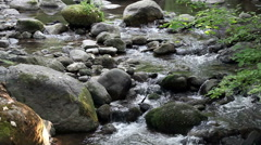 Creek Flowing Towards Camera Over Rocks Amid Plants - stock footage