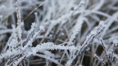 Frosted grass in early morning macro slide scene Stock Footage