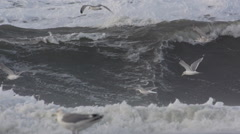 Seagulls in Storm Surf North Sea Stock Footage