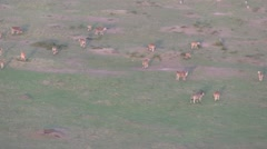 Ballooning over Maasai Mara National Reserve narko, Kenya. Stock Footage