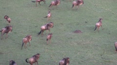 Ballooning over Maasai Mara National Reserve Stock Footage