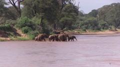 Elephant herd walk in river drinking water 7 Stock Footage