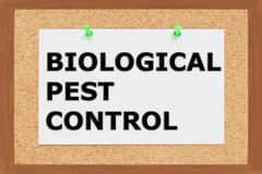 Biological Pest Control  concept Stock Illustration