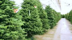 Beautiful fresh cut Christmas trees at Christmas tree farm Stock Footage