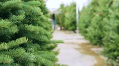 Beautiful fresh cut Christmas trees at Christmas tree farm. Stock Footage