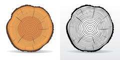 Tree rings and saw cut tree trunk Stock Illustration