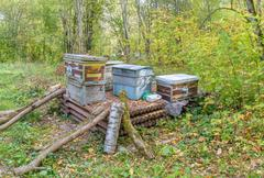 Dump of old wooden hives, abandoned in woods - stock photo