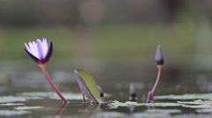 Lotus flower of the fount in the Memorial Hall Taiwan-Dan Stock Footage