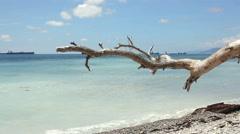 Old snag near coast sea at sunny day Stock Footage