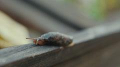 Slug Crawling On Wooden Board - stock footage