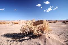 Chile, Atacama Desert, Dry desert herbs - stock photo