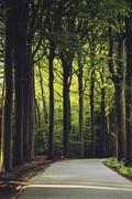 Belgium, Brugge, View along road curving through forest - stock photo