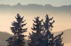 Switzerland, Appenzell Ausserrhoden, Trees in wintertime - stock photo