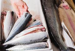 Hand arranging fish in a box Stock Photos