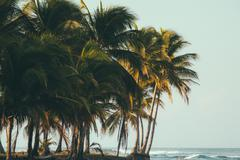 Costa Rica, Tropical beach with palm trees Stock Photos