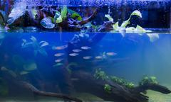 freshwater aquarium - stock photo