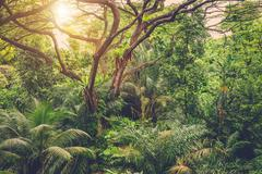 Sun shining into tropical green jungle Stock Photos