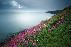 Ireland, Dublin, Howth, Blooming Flowers - stock photo