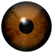 Brown eye illustration isolated on white Stock Illustration
