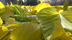 Yellow fallen leaves on ground - autumn sunny day - close-up Stock Footage