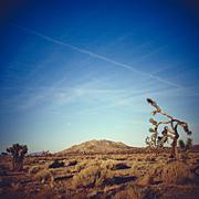 USA, California, Joshua Tree National Park, Landscape with hill and single tree Stock Photos